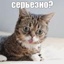 :lil_bub_84: